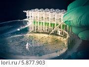 Купить «Ученый работает с бактериальной колонией», фото № 5877903, снято 25 августа 2012 г. (c) Аnna Ivanova / Фотобанк Лори
