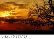 Красно-оранжевый закат на фоне мертвого дерева. Силуэт дерева на фоне заката. Стоковое фото, фотограф Вадим Келин / Фотобанк Лори