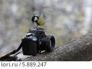 Птичка вылетела (2013 год). Редакционное фото, фотограф Дмитрий Сушкин / Фотобанк Лори