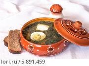 Зеленые щи с яйцом и сметаной. Стоковое фото, фотограф Екатерина Радомская / Фотобанк Лори