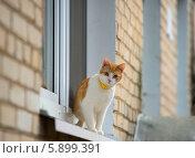 Рыжий кот на окне. Стоковое фото, фотограф Alexander Mirt / Фотобанк Лори