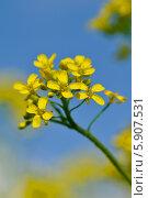 Полевые цветы. Стоковое фото, фотограф Бушаева Екатерина / Фотобанк Лори