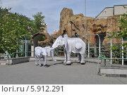 Купить «Скульптура слонов в московском зоопарке», эксклюзивное фото № 5912291, снято 8 мая 2014 г. (c) lana1501 / Фотобанк Лори