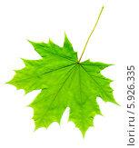 Купить «Зеленый лист клена на белом фоне», фото № 5926335, снято 11 декабря 2019 г. (c) Анна Павлова / Фотобанк Лори