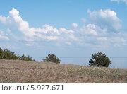 Молодые сосны растут на песчаной почве Куршской косы (2014 год). Редакционное фото, фотограф Svet / Фотобанк Лори
