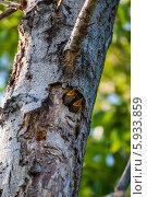 Птенцы скворца. Стоковое фото, фотограф Андрей Горшков / Фотобанк Лори