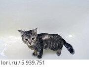 Мокрый кот. Стоковое фото, фотограф OlgaM. / Фотобанк Лори