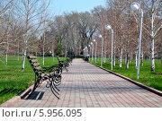 Скамейки в парке. Стоковое фото, фотограф Nuridin Kaliyev / Фотобанк Лори