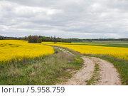 Сельская дорога между цветущими рапсовыми полями, Беларусь (2014 год). Стоковое фото, фотограф Литвяк Игорь / Фотобанк Лори
