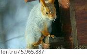 Купить «Белка в кормушке», видеоролик № 5965887, снято 30 мая 2014 г. (c) Игорь Жоров / Фотобанк Лори