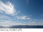 Купить «Белое море летним днём. Архипелаг Кузова на горизонте, вид с корабля», фото № 5967275, снято 4 августа 2013 г. (c) Горшков Игорь / Фотобанк Лори