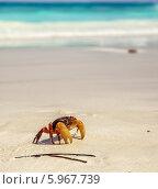 Краб на песке. Стоковое фото, фотограф Евгений Воробьев / Фотобанк Лори