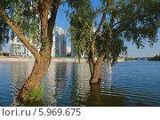 Купить «Ивы, стоящие в воде, на фоне высотных зданий. Разлившаяся река», фото № 5969675, снято 29 мая 2014 г. (c) Емельянов Валерий / Фотобанк Лори