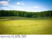 Зеленое поле летом в солнечный день. Стоковое фото, фотограф Екатерина Воронкова / Фотобанк Лори