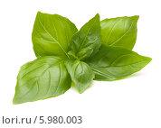 Купить «Свежие листья зеленого базилика на белом фоне», фото № 5980003, снято 25 июля 2013 г. (c) Natalja Stotika / Фотобанк Лори