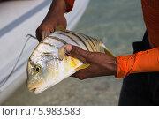 Морская рыба. Стоковое фото, фотограф Анна Королева / Фотобанк Лори