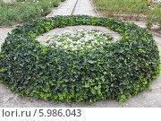 Клумба в саду Балчик. Болгария. Стоковое фото, фотограф Анна Алексеева / Фотобанк Лори