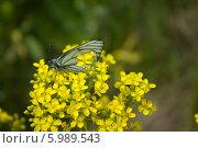 Бабочка на цветке. Стоковое фото, фотограф Владимир Кориков / Фотобанк Лори