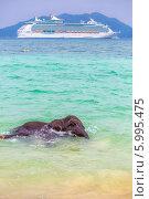 Слоненок купается в море, на фоне круизного корабля. Стоковое фото, фотограф Евгений Воробьев / Фотобанк Лори