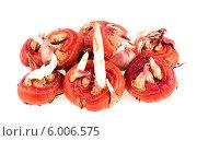 Купить «Луковицы гладиолусов на белом фоне», фото № 6006575, снято 20 апреля 2014 г. (c) Литвяк Игорь / Фотобанк Лори