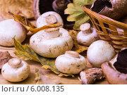 Грибы и осенняя листва. Стоковое фото, фотограф Дмитрий Бодяев / Фотобанк Лори