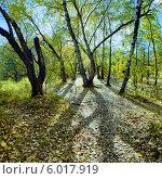 Купить «Осенний лес в контровом свете», фото № 6017919, снято 18 августа 2019 г. (c) Михаил Марковский / Фотобанк Лори