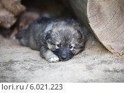 Щенок  бездомный. Стоковое фото, фотограф Svetlana Zavrazhina / Фотобанк Лори