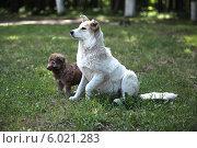Дворняги. Стоковое фото, фотограф Svetlana Zavrazhina / Фотобанк Лори
