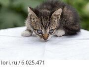Портрет маленького полосатого котенка на светлой поверхности. Стоковое фото, фотограф Елена Ларина / Фотобанк Лори