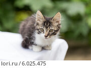 Маленький пушистый полосатый котенок. Стоковое фото, фотограф Елена Ларина / Фотобанк Лори