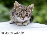Полосатый котенок на природе. Стоковое фото, фотограф Елена Ларина / Фотобанк Лори