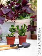 Купить «Пересадка комнатных растений на балконе», фото № 6032887, снято 20 июня 2014 г. (c) Татьяна Ляпи / Фотобанк Лори