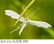 Купить «Белый мотылёк расставив крылья сидит на траве», эксклюзивное фото № 6038395, снято 6 июня 2014 г. (c) Игорь Низов / Фотобанк Лори