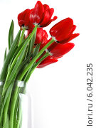 Букет красных тюльпанов. Стоковое фото, фотограф Tatyana Krasikova / Фотобанк Лори