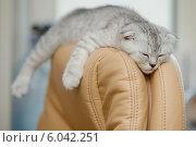 Купить «Котенок спит на кресле», фото № 6042251, снято 22 января 2014 г. (c) Ксения Крылова / Фотобанк Лори