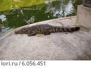 Крокодил у водоема (2013 год). Стоковое фото, фотограф Александр Первунин / Фотобанк Лори