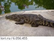 Крокодил на берегу (2013 год). Стоковое фото, фотограф Александр Первунин / Фотобанк Лори