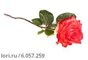 Купить «Роза, изолированно на белом фоне», фото № 6057259, снято 9 июня 2013 г. (c) Литвяк Игорь / Фотобанк Лори