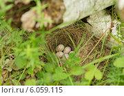 Купить «Гнездо лесных птиц», фото № 6059115, снято 23 марта 2019 г. (c) Екатерина Тимонова / Фотобанк Лори