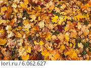 Купить «Фон из опавших листьев. Осень.», фото № 6062627, снято 12 октября 2013 г. (c) Юлия Бабкина / Фотобанк Лори