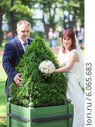 Купить «Молодожены позируют с зеленым растением в кадке», фото № 6065683, снято 3 июля 2013 г. (c) Кекяляйнен Андрей / Фотобанк Лори