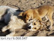 Игривые собаки. Стоковое фото, фотограф Александр Тюнис / Фотобанк Лори