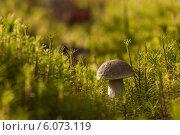 Купить «Гриб во мху», фото № 6073119, снято 26 августа 2012 г. (c) Скудова Елена / Фотобанк Лори