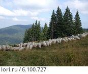 Отара овец в горах Румынии. Стоковое фото, фотограф Irina / Фотобанк Лори
