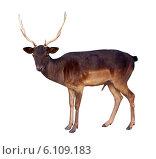Купить «full length of deer buck», фото № 6109183, снято 14 сентября 2012 г. (c) Яков Филимонов / Фотобанк Лори