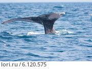 Купить «Хвост синего кита над водой», фото № 6120575, снято 25 февраля 2010 г. (c) Сергей Колесников / Фотобанк Лори