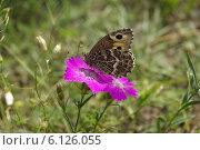 Бабочка на цветке. Стоковое фото, фотограф Анастасия Долгова / Фотобанк Лори
