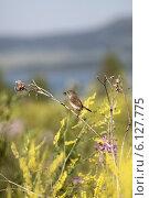Купить «Взрослая птица держит в клюве насекомое на фоне высокой травы и озера», эксклюзивное фото № 6127775, снято 12 июля 2014 г. (c) Валерий Акулич / Фотобанк Лори