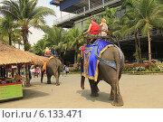 Купить «Таиланд. Тропический сад Нонг Нуч (Nong Nooch)», фото № 6133471, снято 22 февраля 2014 г. (c) Алексей Сварцов / Фотобанк Лори