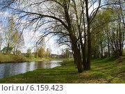 Плакучая ива над рекой. Стоковое фото, фотограф Мария Бурыхина / Фотобанк Лори